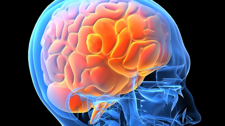 Science Makes A New Breakthrough in Altering the Brain's Memory