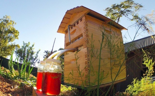 This Invention Can Extract Honey Without Disrupting Bees