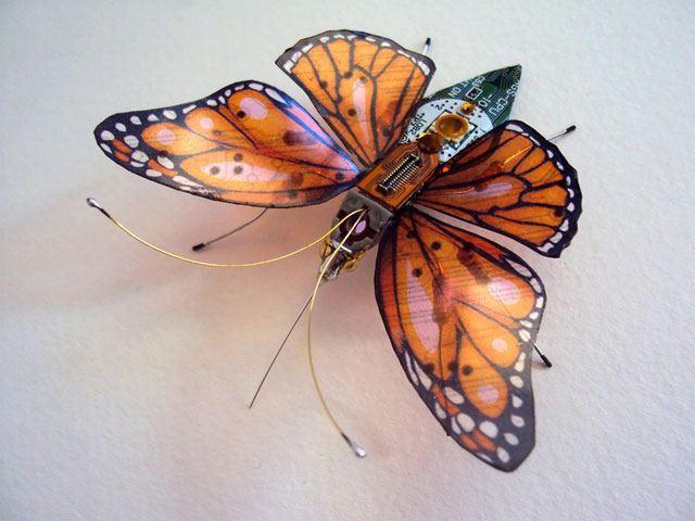 butterflycomp