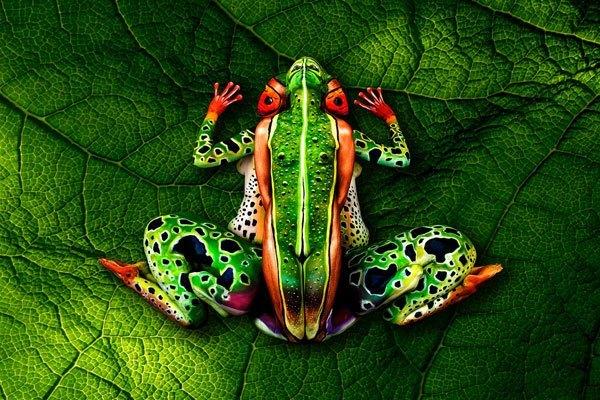 frog-johannes-stoetter_2