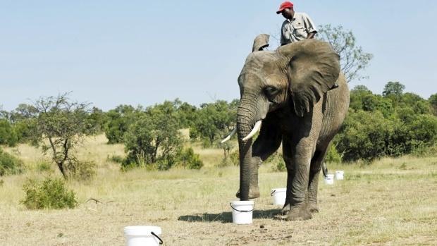 elephant-bomb-sniffer-jpg
