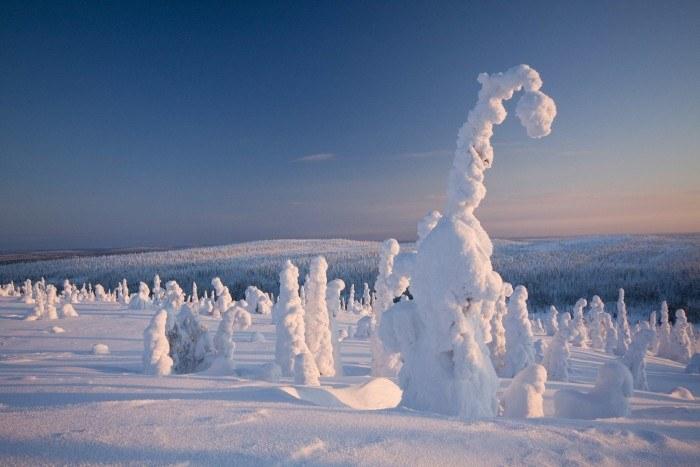 frozen-forest-finland-woe1