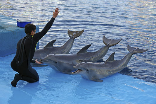 4888088_6_9e2b_trois-dauphins-en-captivite-lors-d-un_fe9e24d4c6d8bb5b6b579b66868a4732