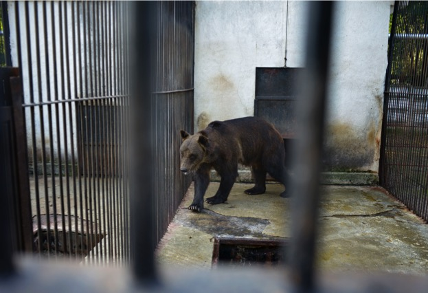 bear_worldanimalprotection_623