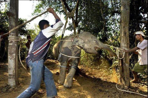 elephant_grande