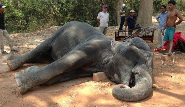 Animal Cruelty: The Tourist Attractions that Should be Banned