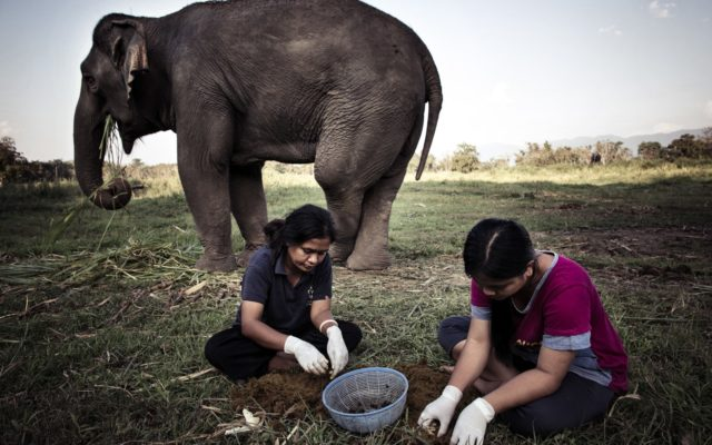 Meet The Guy Who Wants to Convince You to Drink Coffee made of Elephant Sh*t