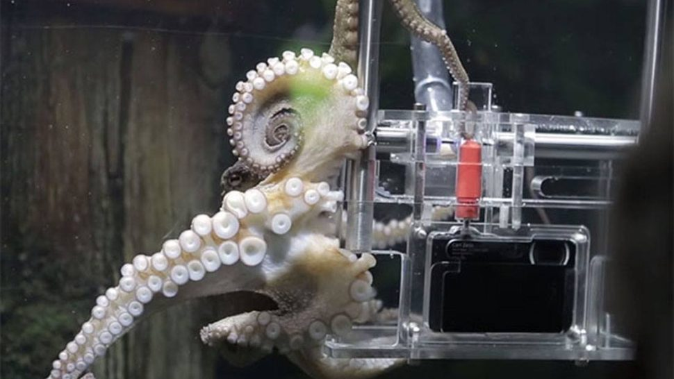 Marine Biologists Gave This Octopus a Camera and Now Its Snapping Photos