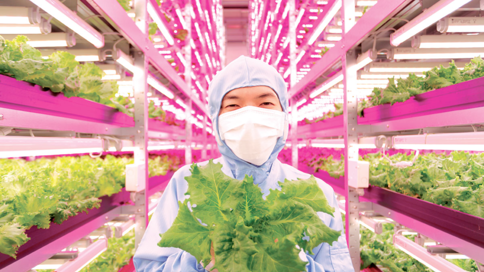 The Future of Agriculture: Vertical Farming Uses 95% Less Water, and No Pesticides