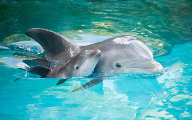 Dolphins Having 'Conversations' Like Humans. True or False?