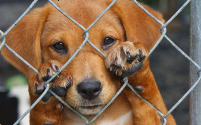 Why You Should Be Concerned that USDA Removed Animal Welfare Reports from its Website
