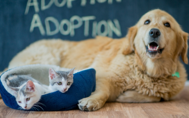 San Francisco Passes Law Forcing Pet Stores to Only Sell Rescue Animals