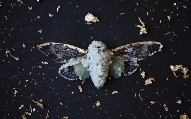 This Artist Transforms Dead Animals Into Crystalized Treasures