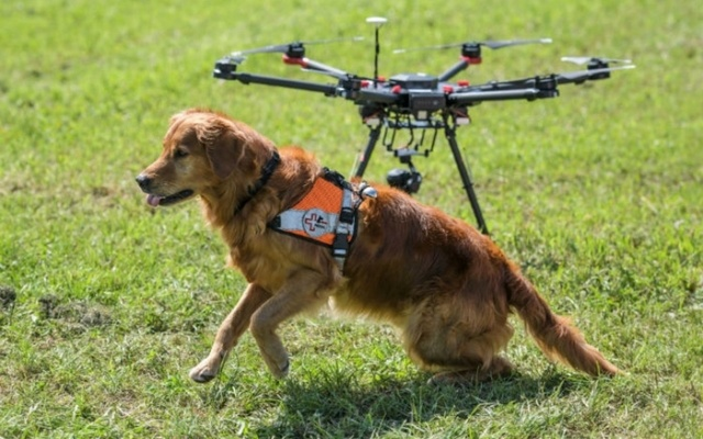 Dogs and Drones Are Teaming Up to Save Lives During Disasters