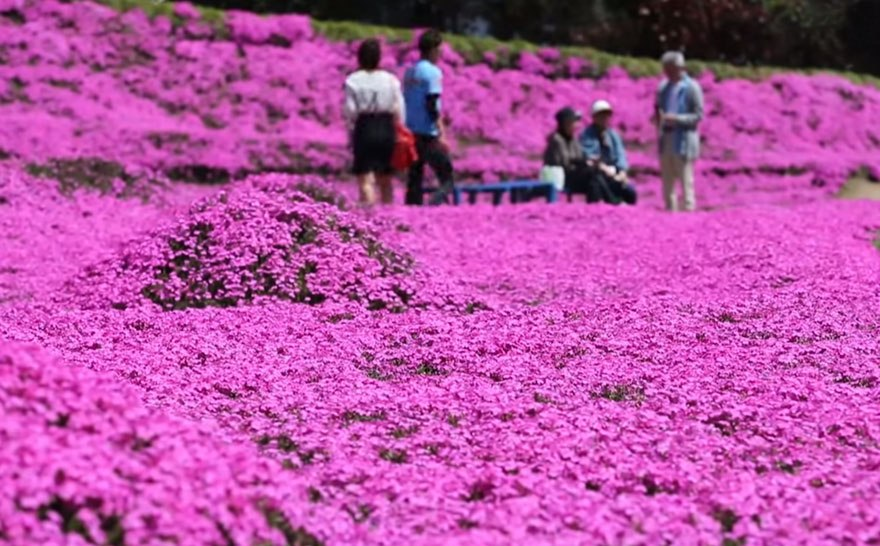 Husband Spent Years Planting Thousands of Flowers For His Blind Wife