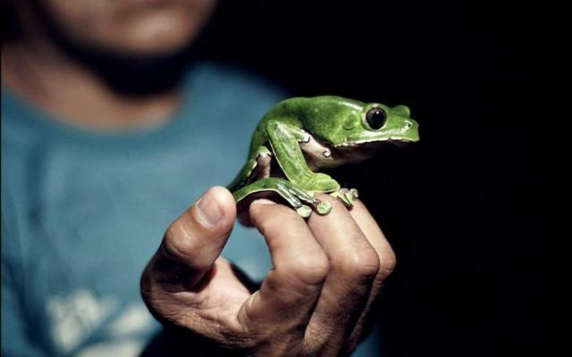 Can This Frog's Special Power Save Millions of Lives?