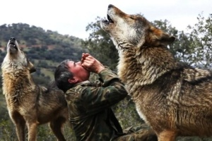 Raised by Wolves, This Man Explains Where Humans Have Failed