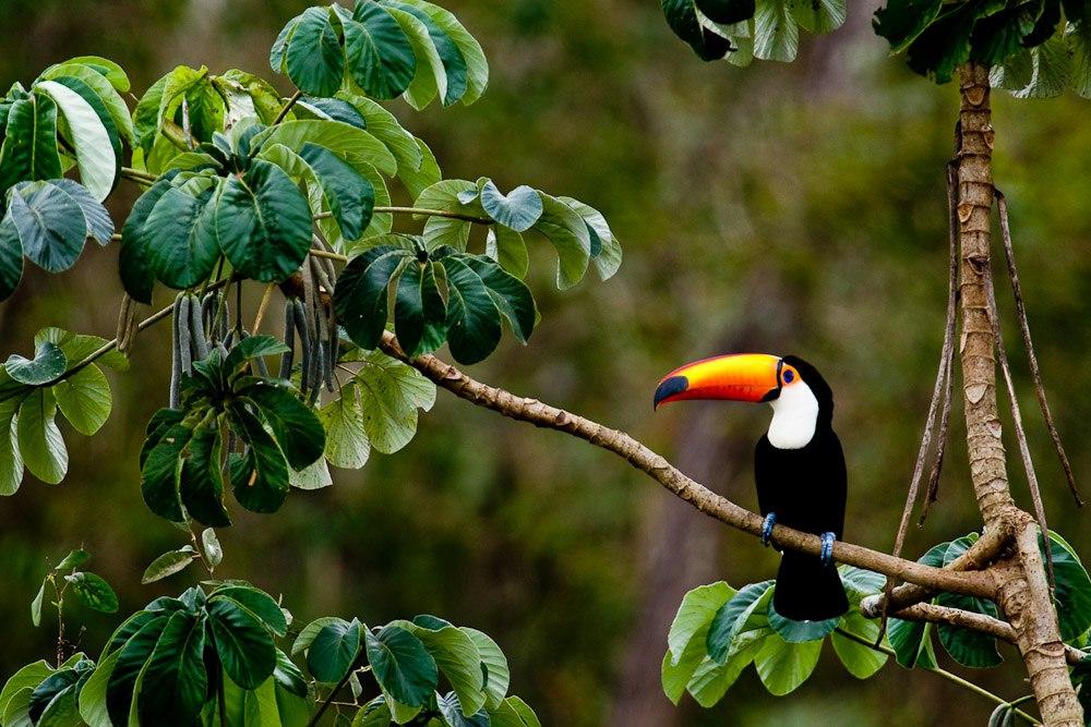 Finally, Something Amazing is Happening to the Amazon Rainforest